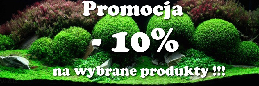 promocja 10% na wybrane produkty