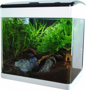 Akwarium 19L LED, gięte szkło, filtr + oświetlenie, czarne + biała ramka
